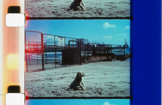 Still from Jeannette Muñoz's Puchuncavi in Jeannette Muñoz: Cinema as an Open Letter